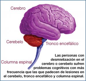Fisiología de la Cognición en la EM